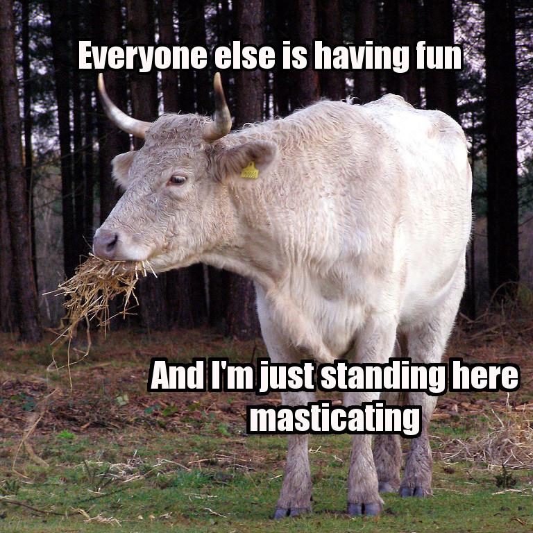 funny-cows-47